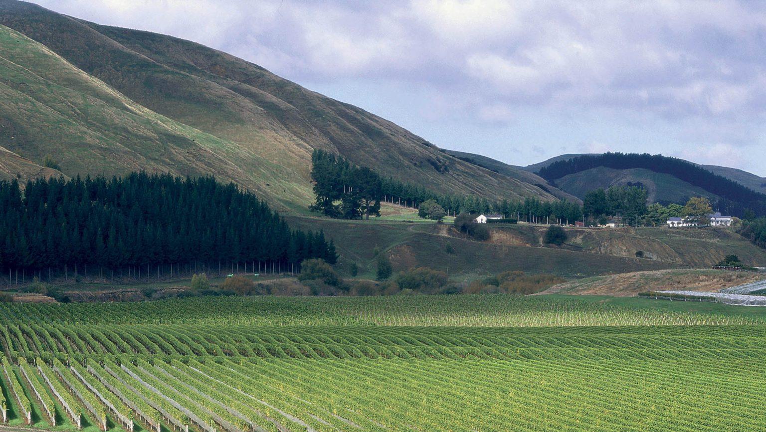 Landscape of Craggy Range vineyard in New Zealand