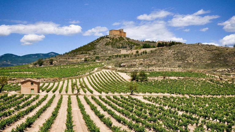 Landscape of Rueda vineyard in Spain