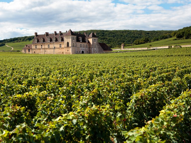 Landscape of a vineyard in Burgundy France