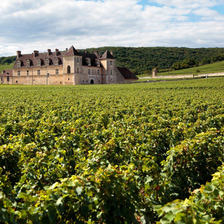Landscape of a vineyard in Burgundy France