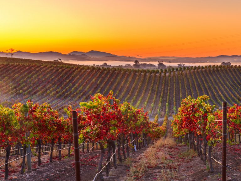 Landscape of a vineyard in Napa Valley California