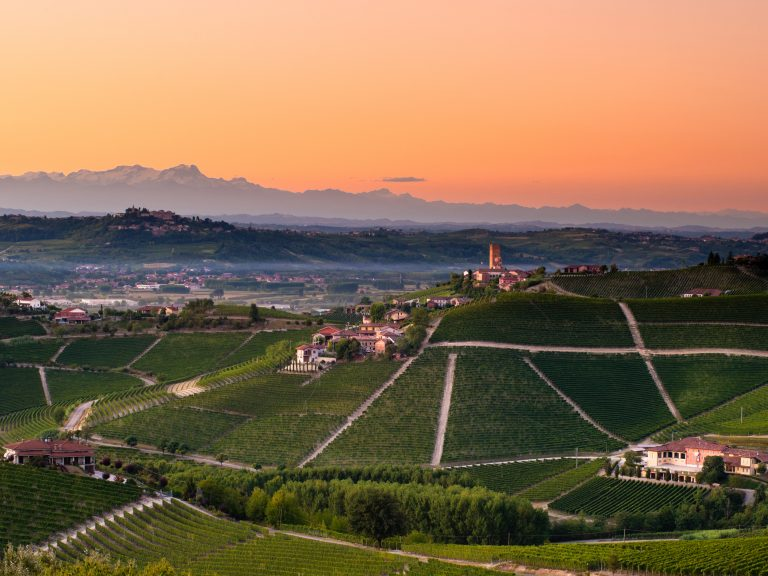 Landscape of a vineyard in Piedmont Italy