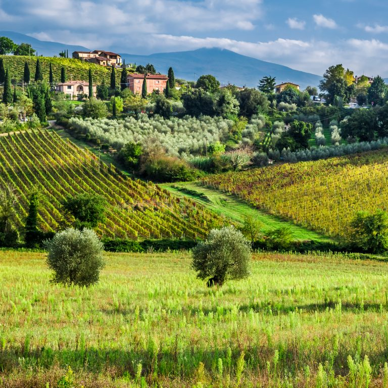 Landscape of a vineyard in Tuscany Italy