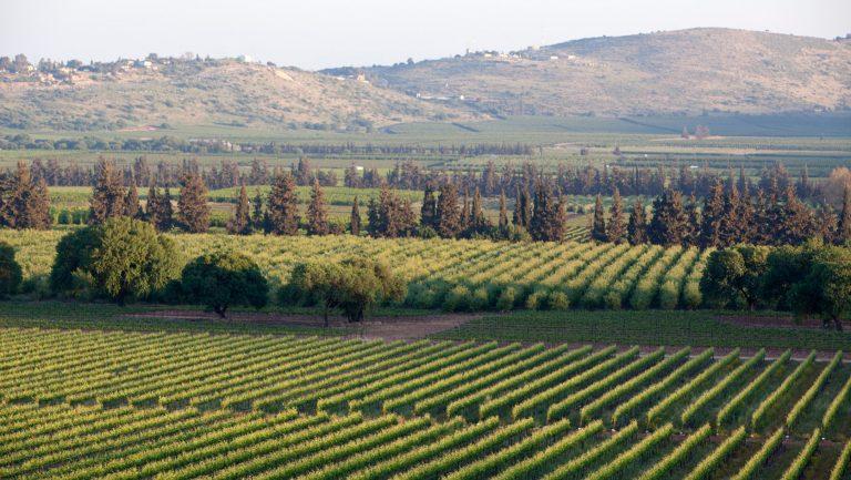 Galil Mountain Winery landscape