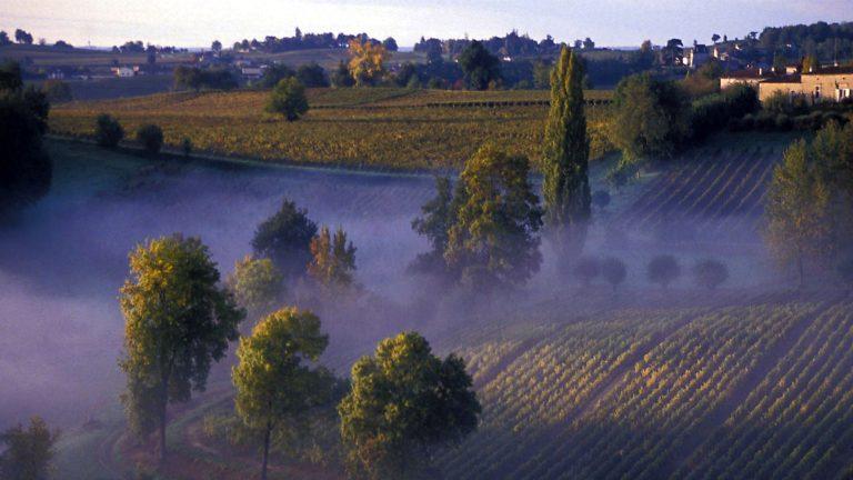 Mist in Sauternes