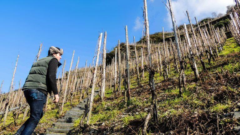 Vom Boden wines