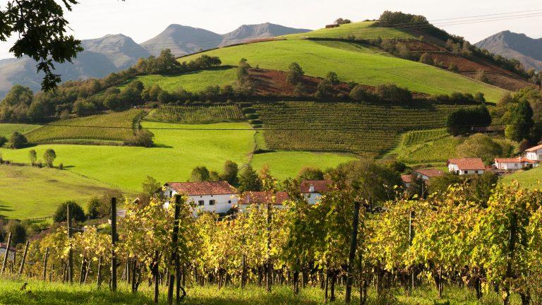 Southwest France vineyards