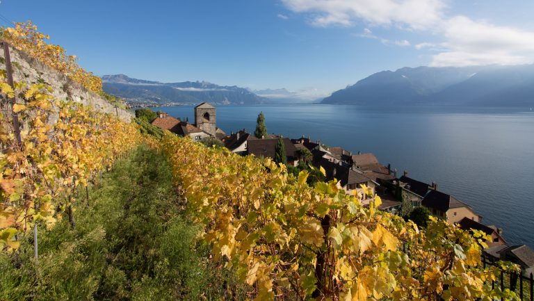 vineyards in Switzerland