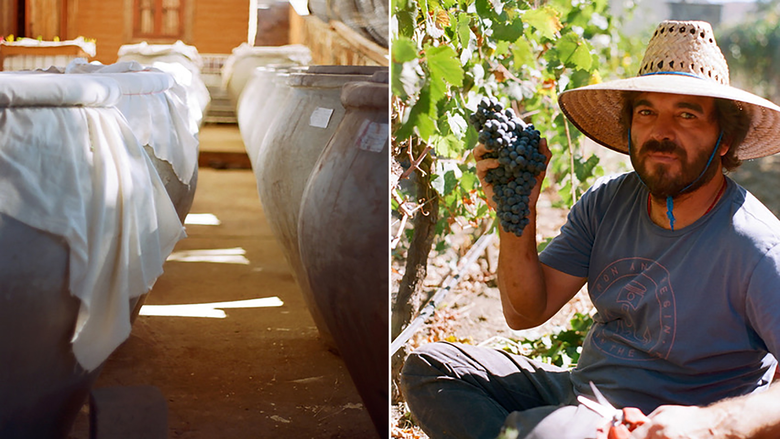 Wines from Baja Putting Mexico on the Map for U S  Buyers
