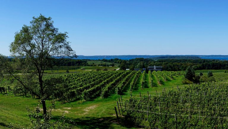 vineyard near Grand Traverse Bay
