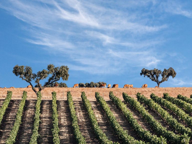 Wines of Alentejo