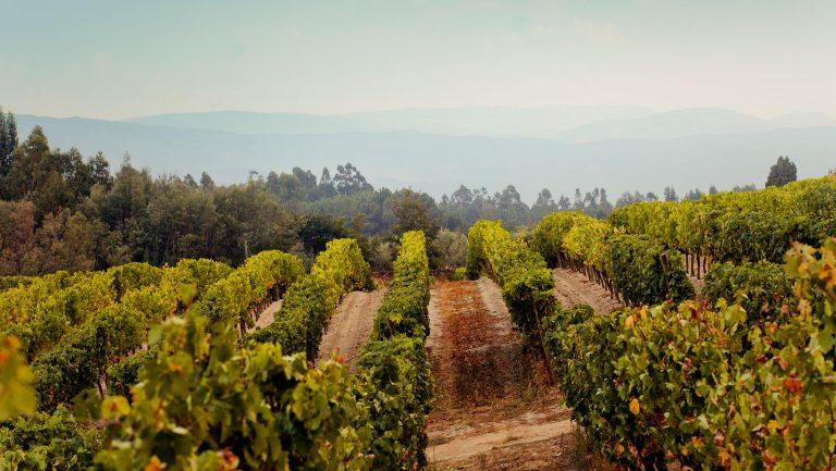 Dao Portuguese vineyard