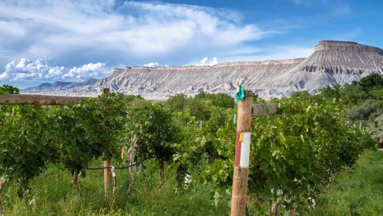 Grand Valley Colorado