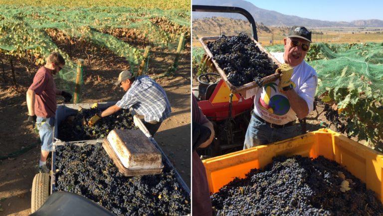 Tehachapi 2018 harvest