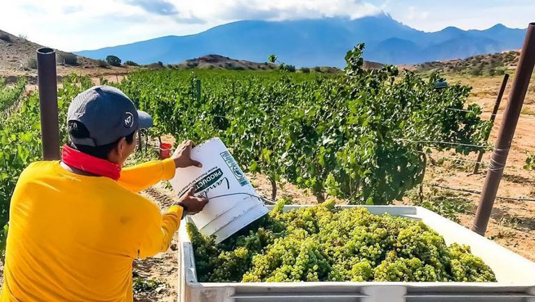 Why Gruet Partnered with a Native American Tribe to Grow Grapes