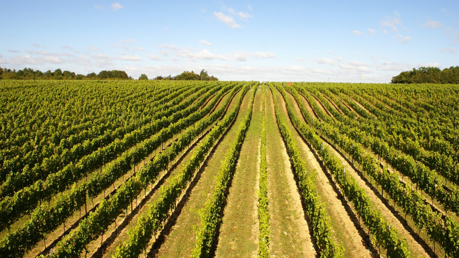 Exploring the Rise of English Sparkling Wine