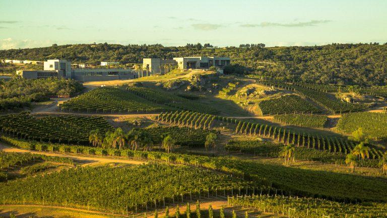 Exploring the Wines of Uruguay