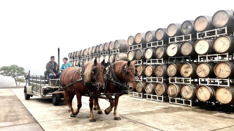 horse viticulture